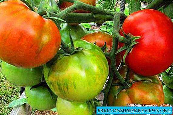 The use of potassium permanganate for tomatoes