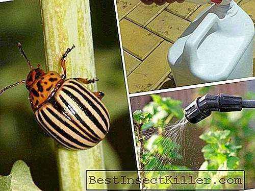 The use of the drug Corado from the Colorado potato beetle