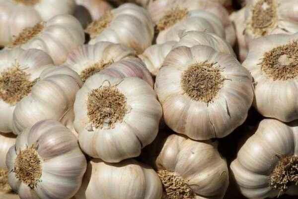 Then plant garlic