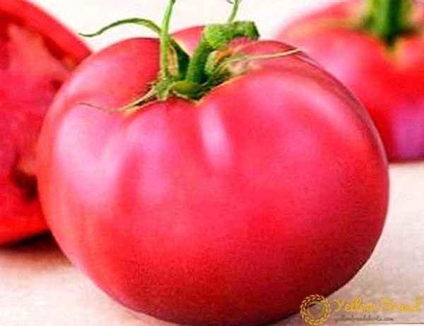Tomato Description Paradise Delight