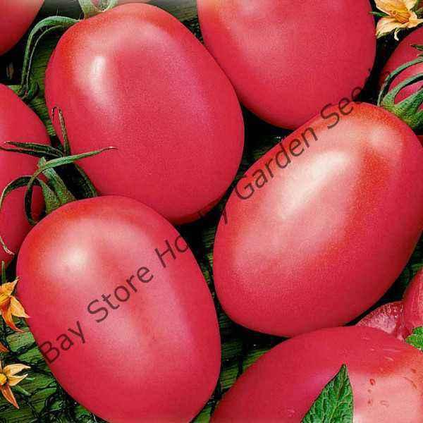 Tomato variety pink flamingo