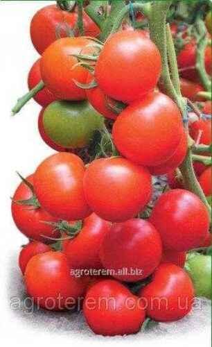 Tyler Tomato Description