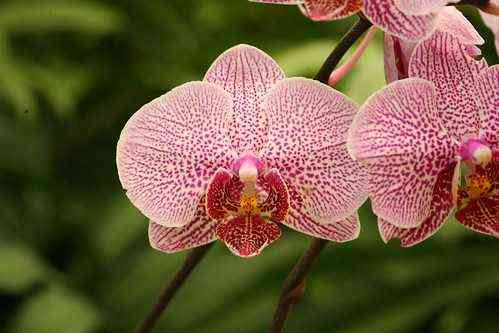 Types of Orchid Growth