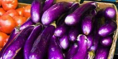 Useful and harmful properties of eggplant for health