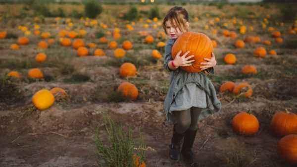 Useful and harmful properties of pumpkin for men