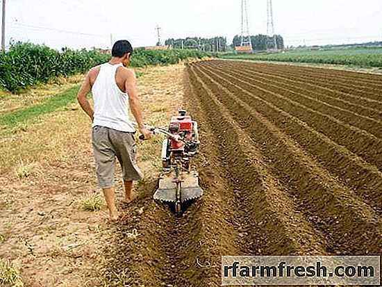 Using a walk-behind tractor for growing potatoes