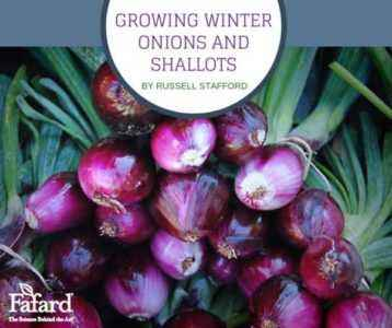 Varieties and features of planting winter onions