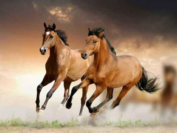 Varieties of horse running