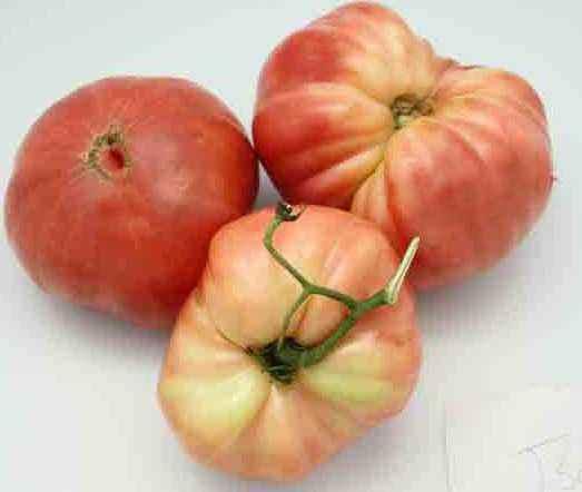 Variety of tomato Royal gift