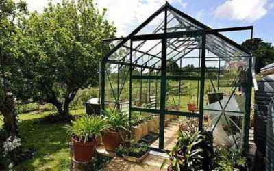 Watering peppers in a polycarbonate greenhouse