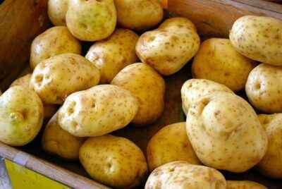 What are the benefits and harms of potato starch