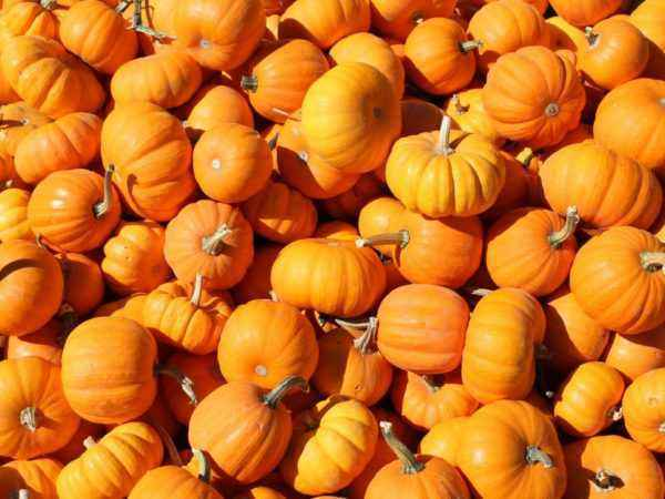 What is pumpkin: vegetable, berry or fruit