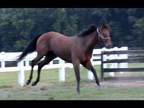 What is the fastest horse in the world