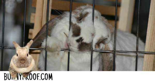 What to do if a rabbit nibbles a wooden cage