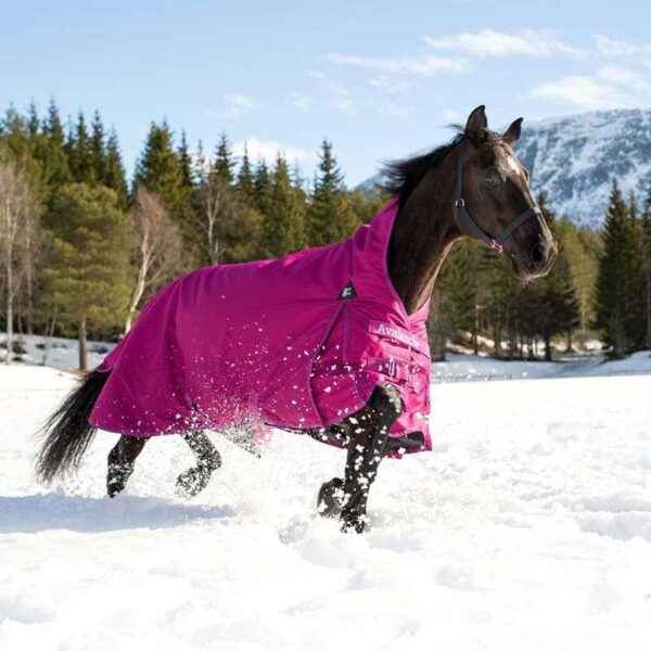 What types of horse blankets are there and why are they needed