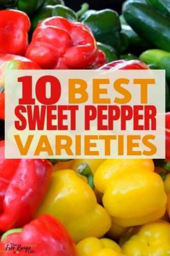 What varieties of sweet pepper are considered the best