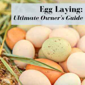 When do Indoor Eggs usually begin to lay