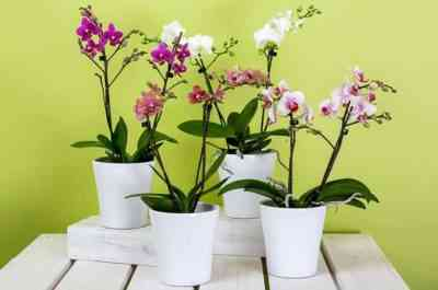 Which is better to choose a pot for orchids