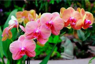 Which orchids are the most beautiful in the world