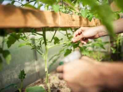 Удобрение позволит добиться увеличение урожая