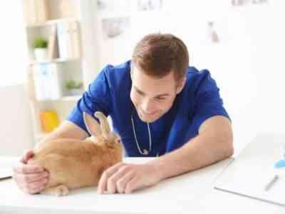How to treat rabbits