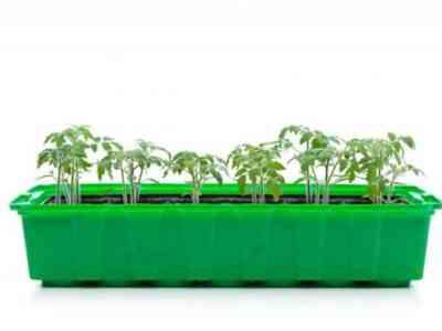 Растения не следует обильно поливать