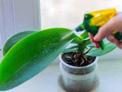 Уровень влажности влияет на появление цветоноса