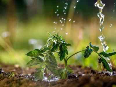 При хорошем уходе получите богатый урожай