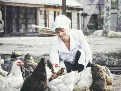 Диагностика и лечение инфекционного бронхита у кур