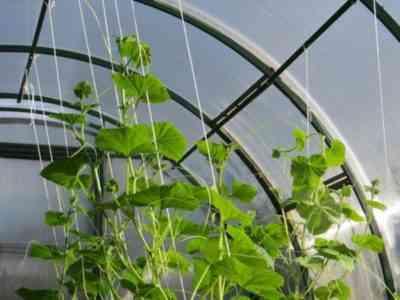 Рост растений можно стимулировать