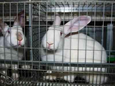 DIY rabbit cage
