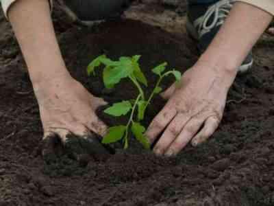 Подкормки необходимы для полноценного роста