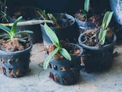 При выращивании орхидеи важны температура и влажность воздуха