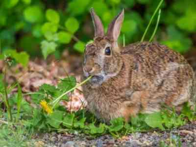 Features of feeding rabbits