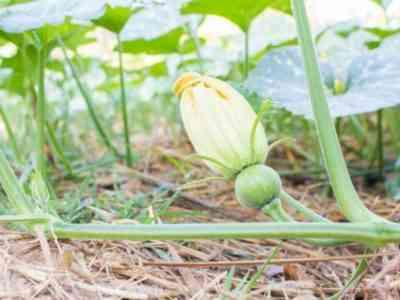 Формирование поможет получить хороший урожай