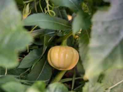Регулярно осматривайте растение на наличие насекомых