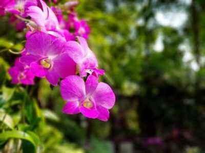 Выращивать растение в домашних условиях легко