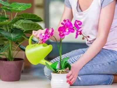 Орхидея нуждается в дополнительном питании