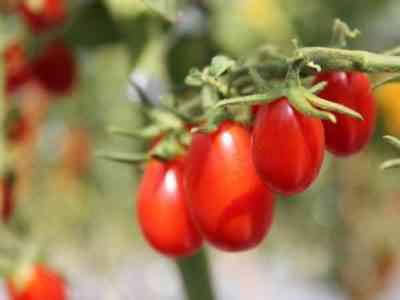 Растения обладают стойкостью ко многим заболеваниям