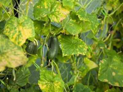 Регулярное проветривание не даст растениям заболеть