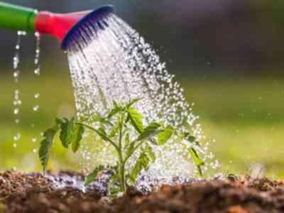 Дождевая вода идеально подходит для полива