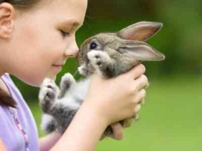 Care for decorative rabbits