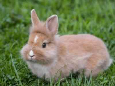 Rabbit Squirrel