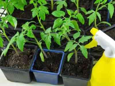 Препарат не оказывает негативного влияния на насекомых
