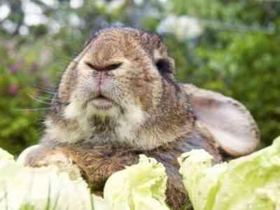 Ralph Rabbit