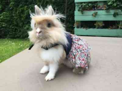 DIY harness for a rabbit