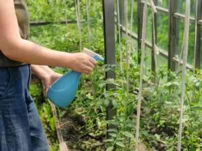 Растения можно опрыскивать на любой стадии роста