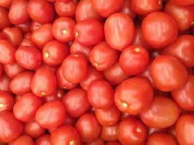 Содержание витаминов в помидорах