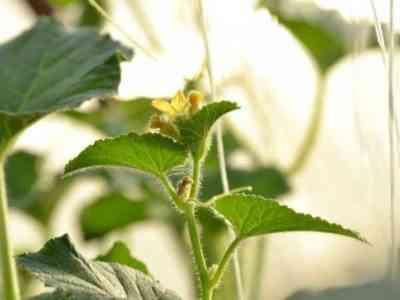 Нужно оградить растения от скачков температуры