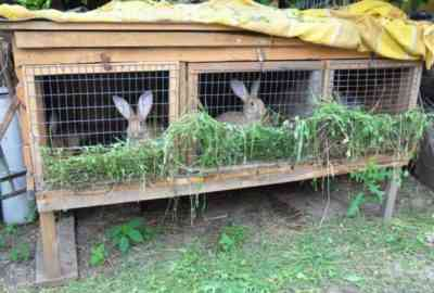 Cages rabbits